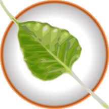 Bodhi_logo